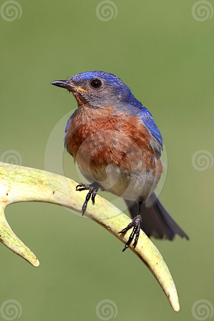 Bluebird Property Management Anderson Sc